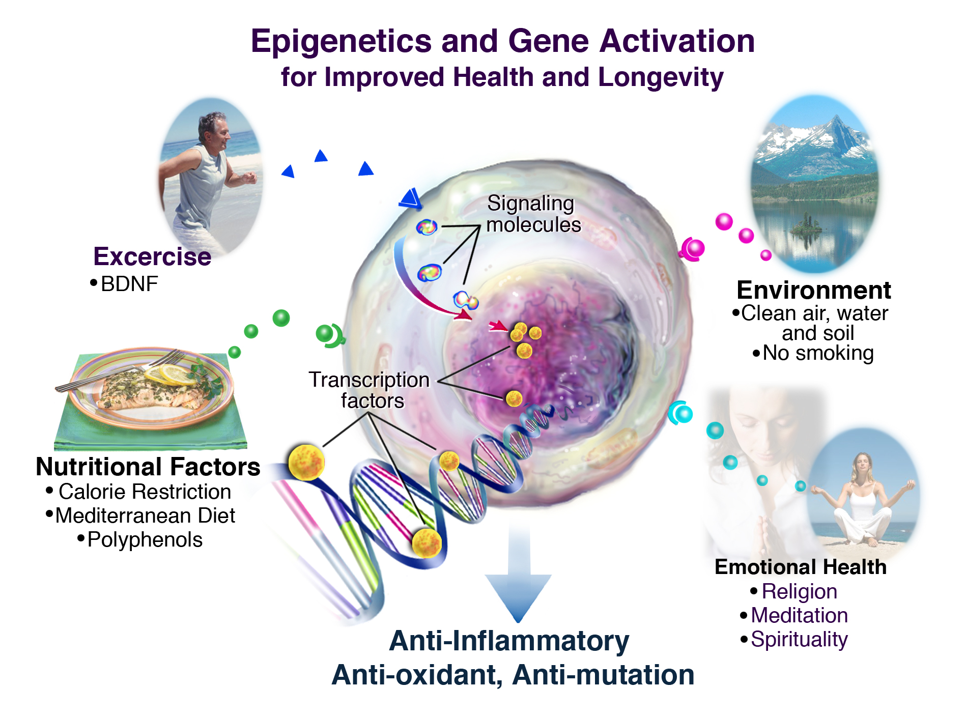 Epigenetic Importance in our Life